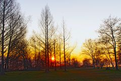 Fiery trees. Back light of a fiery sunset in the trees of a park with red radiation that illuminates the green lawn Royalty Free Stock Photography