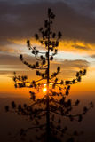 Fiery Yosemite Sunset. A silhouetted pine, in front of a fiery sunset over the Yosemite Valley Stock Images