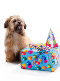 Fiesta de cumpleaños del perrito Fotografía de archivo libre de regalías