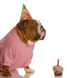 Fiesta de cumpleaños del perro fotos de archivo