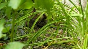 Fiesta de dos gatitos en la hierba almacen de metraje de vídeo