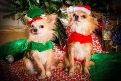 Fiesta de Navidad del perrito imagenes de archivo
