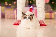 Fiesta de Navidad, mujer de las vacaciones de invierno con el gato Muchacha del Año Nuevo Fotos de archivo