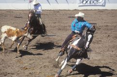Fiesta Rodeo and Stock Horse Show Royalty Free Stock Photo