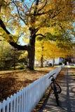 Fiets in de herfst Stock Afbeeldingen