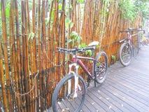 Fiets en bamboeachtergrond Stock Afbeeldingen