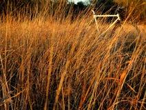 Fiets en lang gras royalty-vrije stock afbeeldingen
