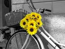 Fiets met zonnebloemen wordt verfraaid die De Zwart-witte foto van Peking, China Royalty-vrije Stock Foto