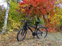 Fiets op achtergrond van de herfstbomen Royalty-vrije Stock Foto's