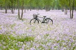 Fiets op het bloemgebied Stock Afbeelding
