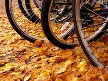 Fietsen in de herfst, Cambridge Stock Afbeeldingen