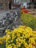 Fietsen en bloemen in Nederland Stock Foto