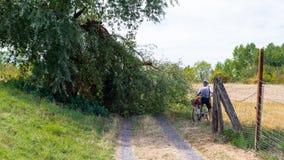 Fietser die een gevallen boom van een sterke wind vermijden die op een landweg in een gebied in West-Duitsland liggen royalty-vrije stock foto
