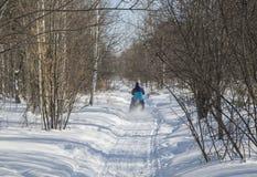 Fietser die op een bergfiets berijden in de sneeuw in het de winterbos stock afbeelding