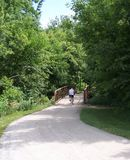Fietser op boom gevoerde fietsweg Royalty-vrije Stock Foto
