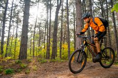 Fietser in Sinaasappel die de Bergfiets berijden op de Sleep in de Mooie Pijnboom Forest Lit door Heldere Zon Stock Foto's