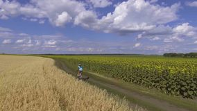 Fietserritten op bloeiend zonnebloemengebied stock video