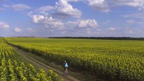 Fietserritten op bloeiend zonnebloemengebied Langzame Motie stock video