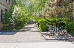 Fietsparkeerterrein bij de Universiteit van Toronto Royalty-vrije Stock Fotografie