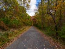 Fietsweg, Concrete Weg door Autumn Forest royalty-vrije stock afbeelding