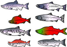 Fifh set. Vector illustraton of a  salmon fish set Royalty Free Stock Photography