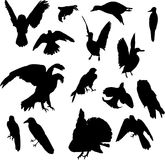 Fifteen birds. Illustration with nine bird silhouettes isolated on white background Royalty Free Stock Photos