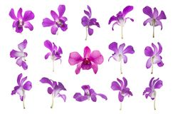Fifteen purple orchid isolated on white Stock Image