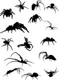 Fifteen spider silhouettes. Illustration with fifteen spider silhouettes isolated on white Stock Photos