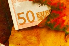 Fifty euro banknote between autumn leaves Stock Photos