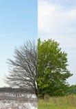 Fifty-fifty träd för vinter och vår Royaltyfria Foton