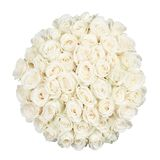 Fifty one roses Stock Photo