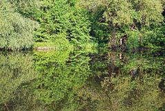 Fifty shades of green. Different trees and grass are mirroring in the water Royalty Free Stock Photos