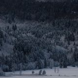 Fifty Shades of Winter Forest royalty free stock photos