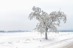Figé et neige a couvert des arbres le long de la voie Photos stock
