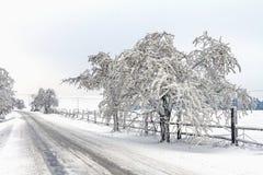 Figé et neige a couvert des arbres le long de la voie Photo libre de droits