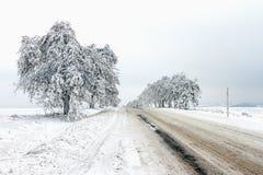 Figé et neige a couvert des arbres le long de la voie Image stock