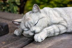 Figürchen - Schlafenkatze Lizenzfreies Stockfoto