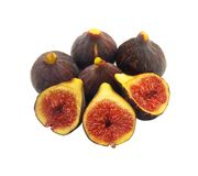 Fig 10 Royaltyfria Foton