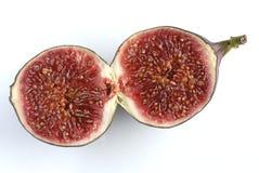 fig Arkivfoton