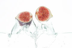 Fig. Two figs jumping out of the water Royalty Free Stock Photos