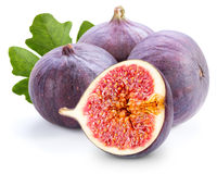 fig immagine stock