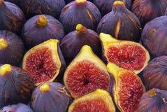 Fig Arkivfoto