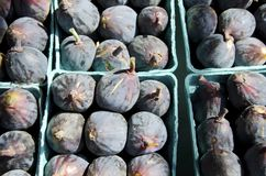 Fig Stock Fotografie