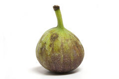 Fig. One nice looking seasoned fig Stock Images