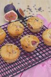 Fig chocolate chip muffins. Homemade baked fig chocolate chip muffins on cooling rack Stock Images
