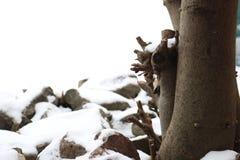 Fig. en stenen met sneeuw wordt behandeld die Stock Fotografie