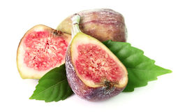Fig fetuses Royalty Free Stock Photo