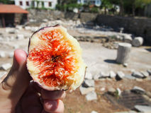 Fig. A freshly bitten into fig picked at an archeological site in Turkey Stock Photos