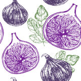 Fig Fruit Hand Draw Sketch Background Pattern. Vector. Fig Fruit with Leaf Hand Draw Sketch Background Pattern. Vintage Style. Vector illustration Stock Images
