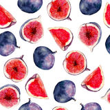 Fig fruit watercolor seamless pattern. Bright tropical fruit isolated on white background. Fig fruit watercolor seamless pattern. Bright tropical fruit isolated Stock Images